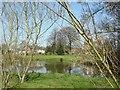 SJ6877 : Pond at Pickmere by Mike Harris