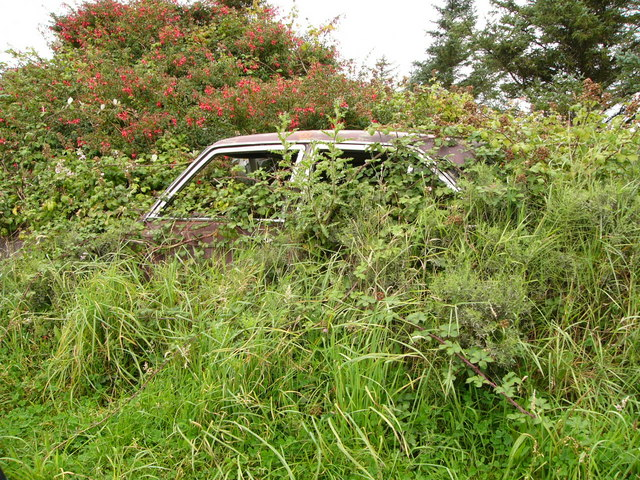 Car returning to nature