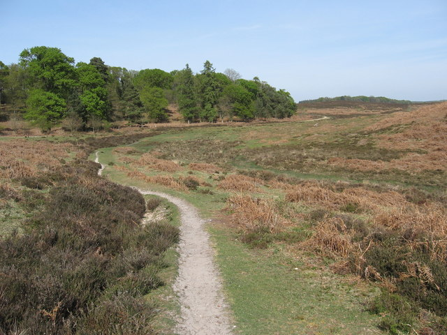 South of Hasley Inclosure, New Forest