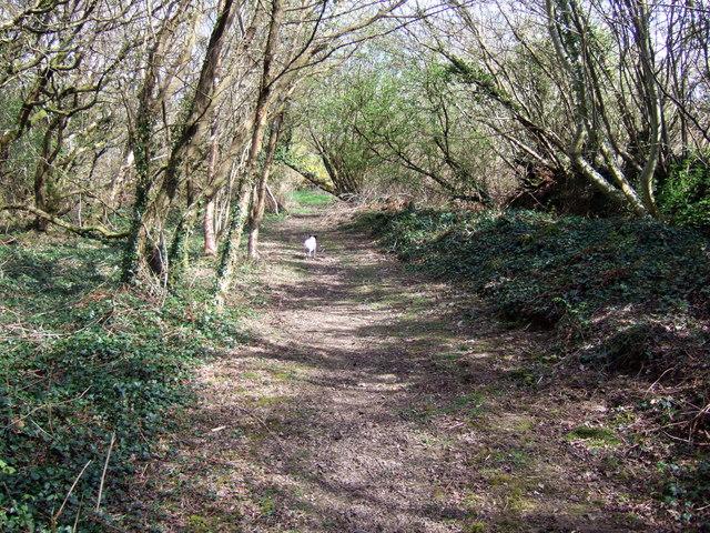 Path near Brynberian