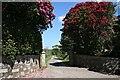 SX3073 : Driveway to Patrieda Barton by Tony Atkin