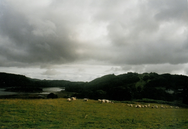 Fields above Loch Sween