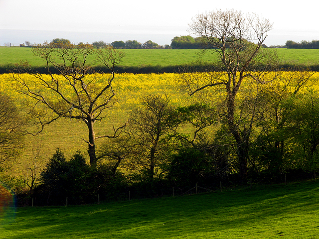 Farmland near Nicholaston Farm