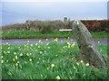 NN9212 : Standing Stones by wfmillar