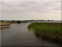 N0654 : Leveret Island, Lough Ree by David Baird