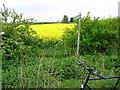 TL3772 : Yellow path by Michael Chamberlain