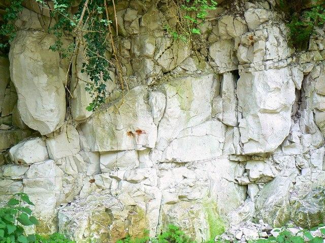 Chalk-face viewed from bridleway, Compton Bassett