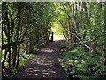 SJ7050 : Shaded Footpath by Ian Bottomley