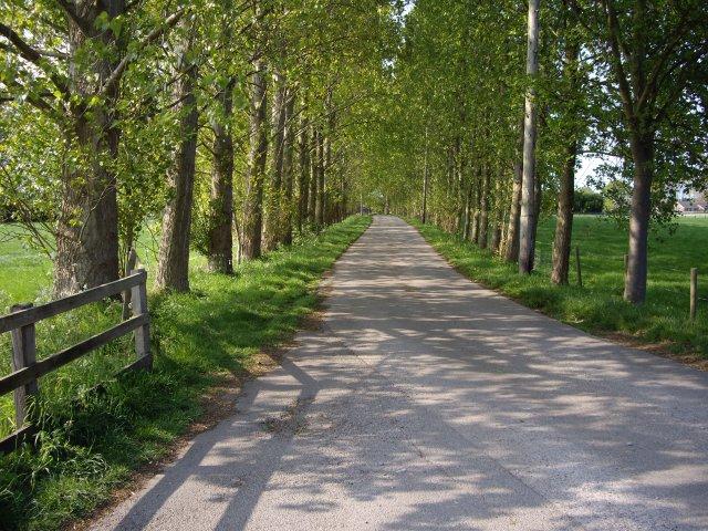 Lane by Cockshades Farm