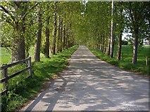 SJ6950 : Lane by Cockshades Farm by Ian Bottomley
