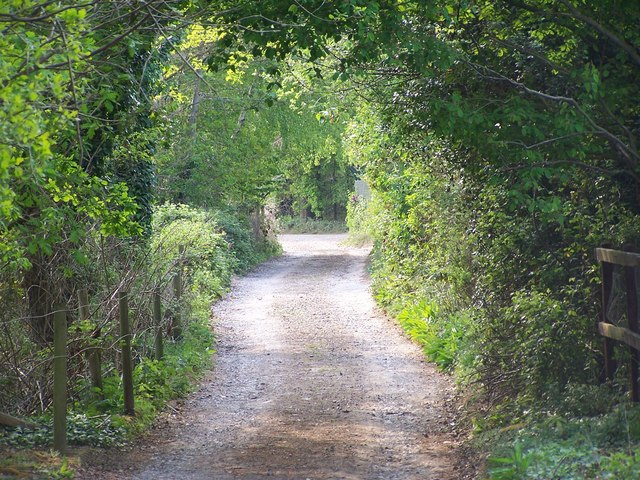 Shady lane near Sherfield English