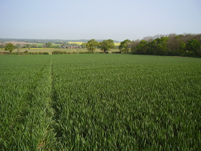 Footpath S98 looking towards Temple Farm