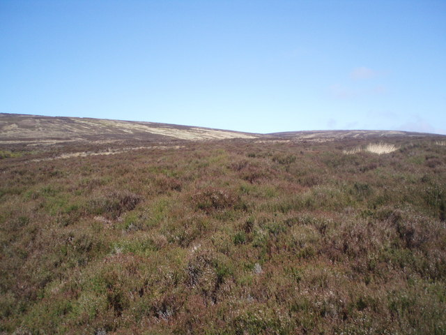 Heather covered hillside.