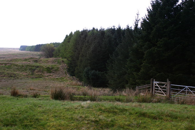 Darleith Muir tree line