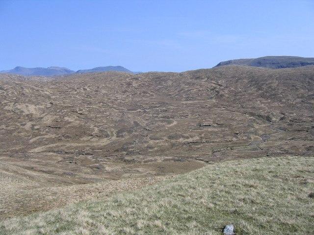 Typical peat bog