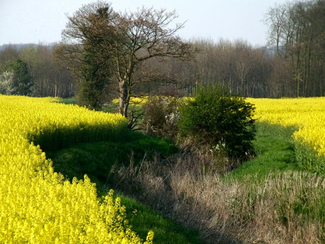 Field crops divided by a drainage channel