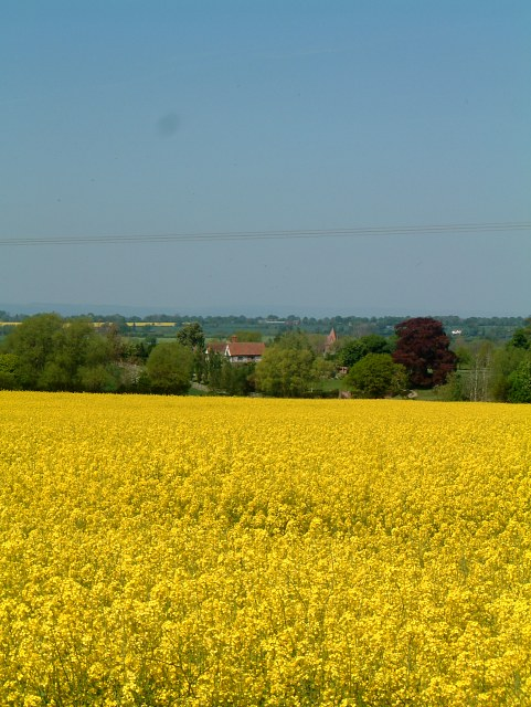 Oilseed Rape and Sibberscote Manor