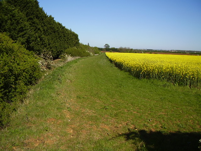 Woodland edge from B1188 Digby