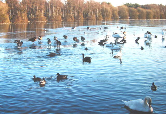 The thaw sets in at Shakerley Mere