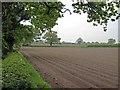 SJ8261 : Neat rows near Charity Farm by John Robinson