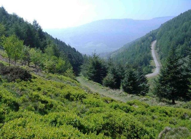 The forest, Medart