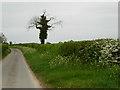 TF7220 : Lane near Gayton by Stephen McKay