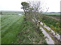 SW7232 : Lane and fields above Little Trevease by Jonathan Billinger