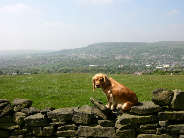 Ramsbottom and Holcombe Hill - a dogs eye view!
