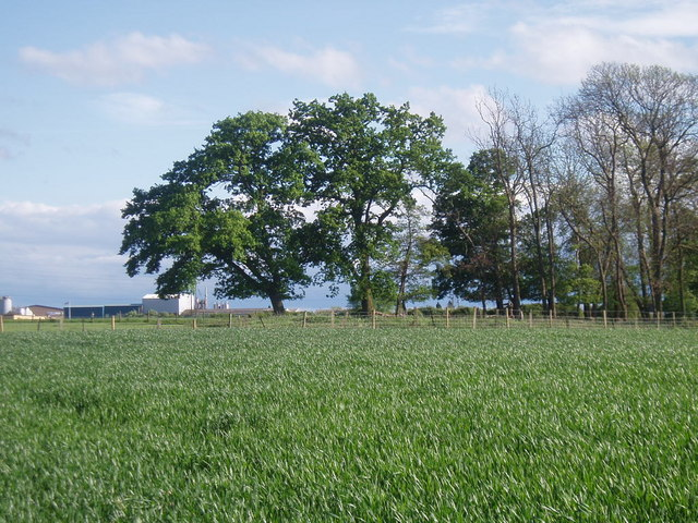 Trees and crops