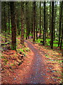 NX4464 : Cycle Trail in Kirroughtree Forest by Iain Thompson