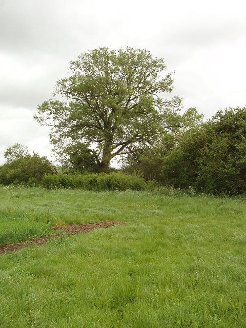 Willow tree at field corner