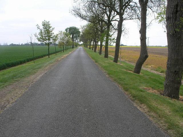 Odd Avenue