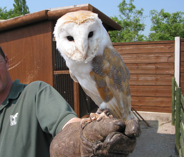 Gauntlet Bird of Prey Centre, near Knutsford