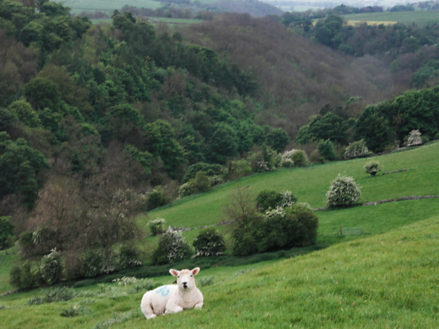 Lathkill Lamb