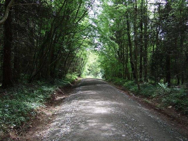 Llwyn Hir Forestry Walk