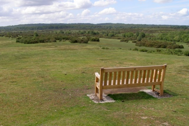 Memorial bench on West Wellow Common, New Forest by Jim Champion
