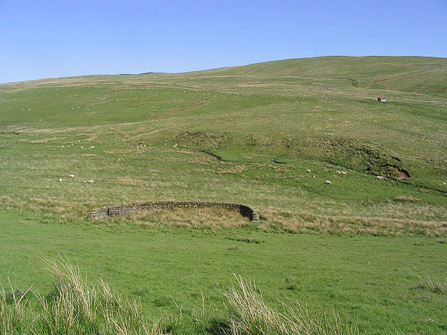 Hill grazing