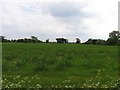TL2986 : Field to the south of Muchwood Lane by Andrew Tatlow