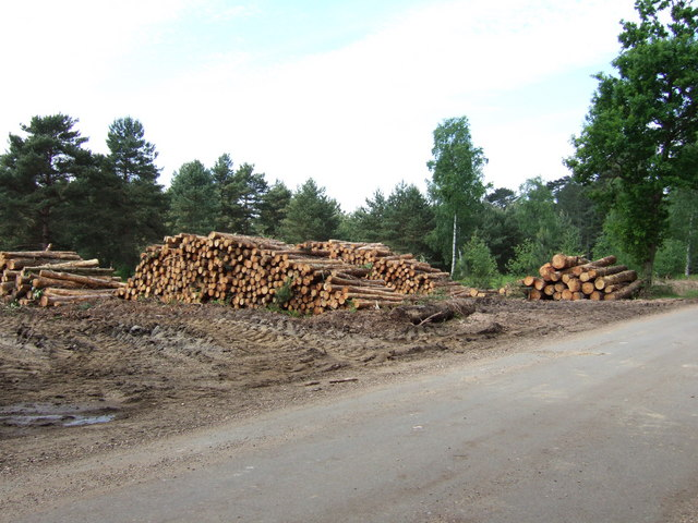 Forest clearance on the Sandringham Estate, Norfolk.