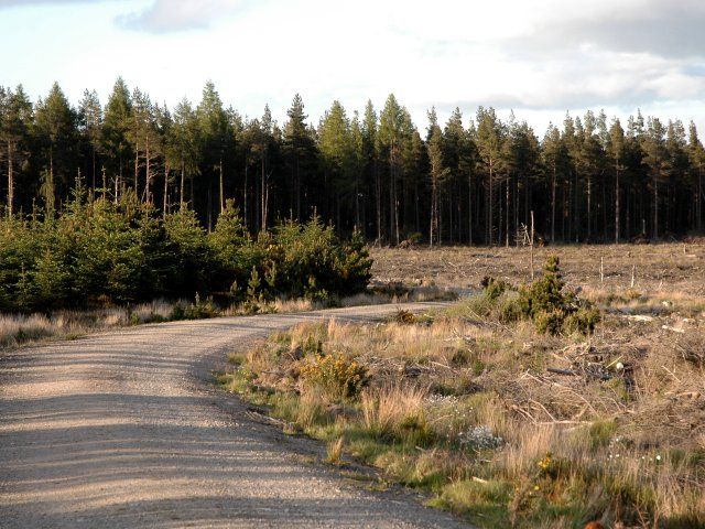 Bennachie Forest