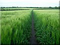 SK5244 : Footpath through barley field by Lynne Kirton
