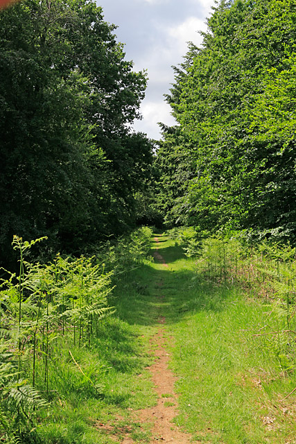 Path in Botley Wood