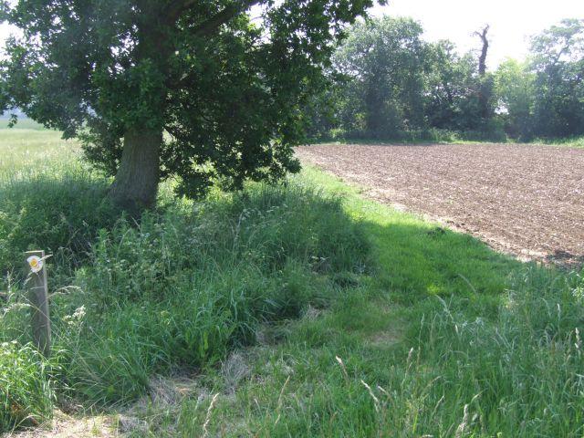 A Shady Spot on the Footpath