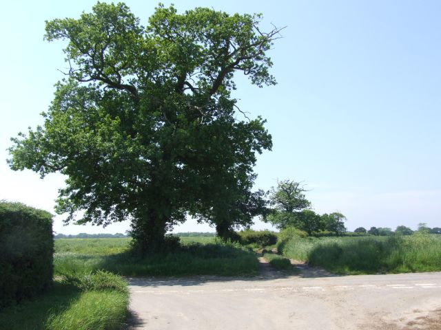 An Old Oak Stands Guard at the Start of Track