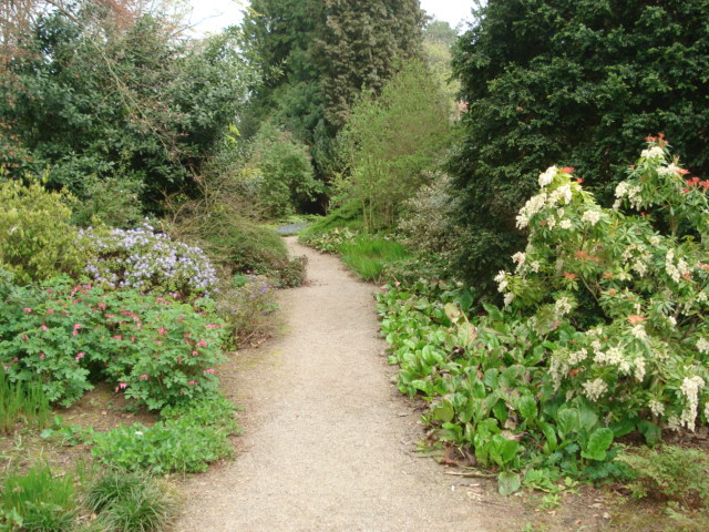 Woodland Garden at Berrington Hall