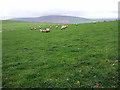 SN0132 : June in Wales by ceridwen