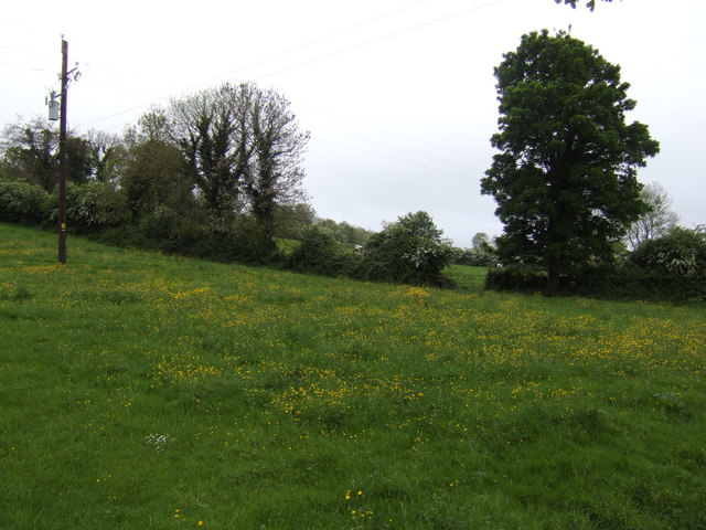Pasture with buttercups, west of Donore