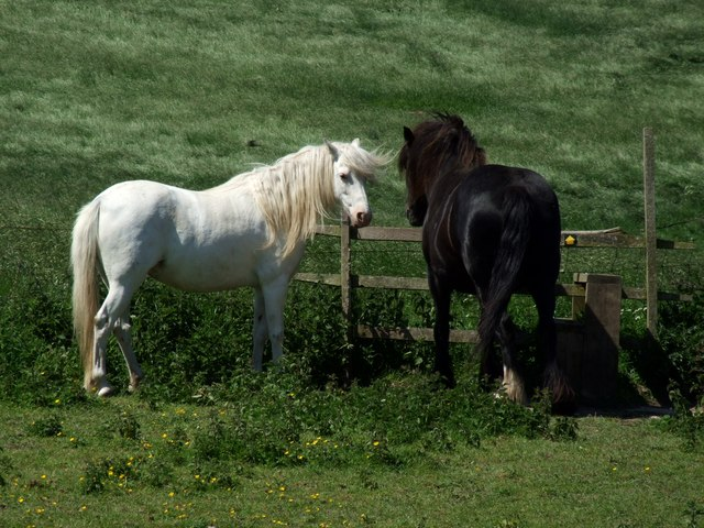 Horses at Snipe Dales