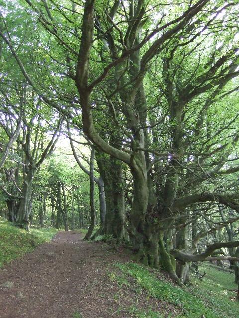 Rhymney Valley Ridgeway Footpath, Wern Ddu