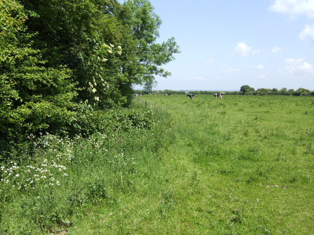 Dairy pasture near Everard's Farm